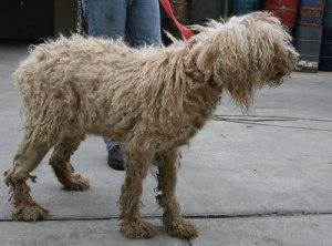 130446618_zCeQz-S F dog