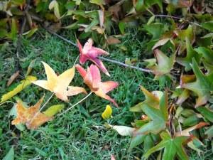 DSCN0385 Autumn Leaves 2