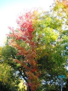 DSCN0396 Elmhurst Trees 2