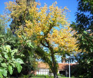 DSCN0421 Coloma Community Center w Autumn Tree