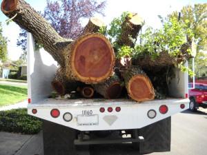 DSCN0438 End of 90 Year Old 51st Street Tree (& my truck)