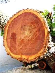 DSCN0441 51st Street Tree Toppled in Storm