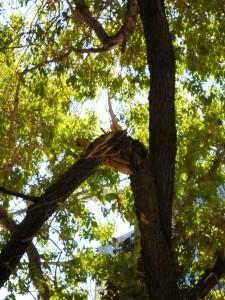 DSCN0449 Broken Branch in Downtown Tree