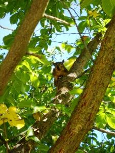 DSCN0474 Elmhurst Squirrel 3
