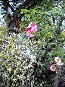 DSCN0481 Fallen Branch After Storm 2
