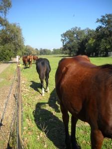 DSCN0637 horses at arboretum gorgeous