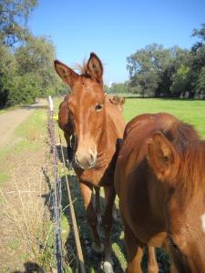 DSCN0639 arboretum horses nice too