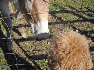 DSCN0643 Noses - Donkey to Poodle
