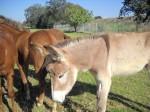 DSCN0645 arboretum donkey very nice
