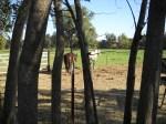 DSCN0663 Arboretum Horse Very Nice