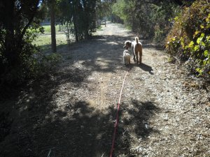 DSCN0679 Samuel Taking a Stroll with God
