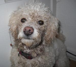 DSCN0716 Mucky Pup Lovely