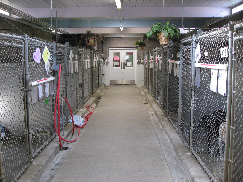 animal shelter kennel designs dog breeds picture